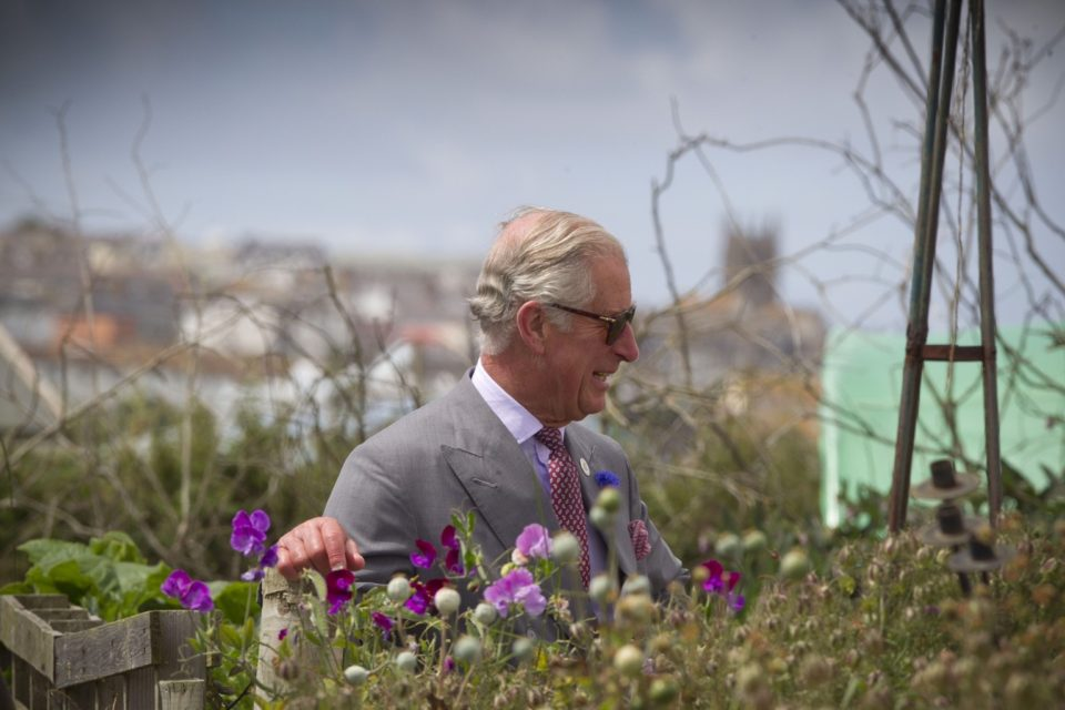 The Duke of Cornwall plants hanging basket competition idea