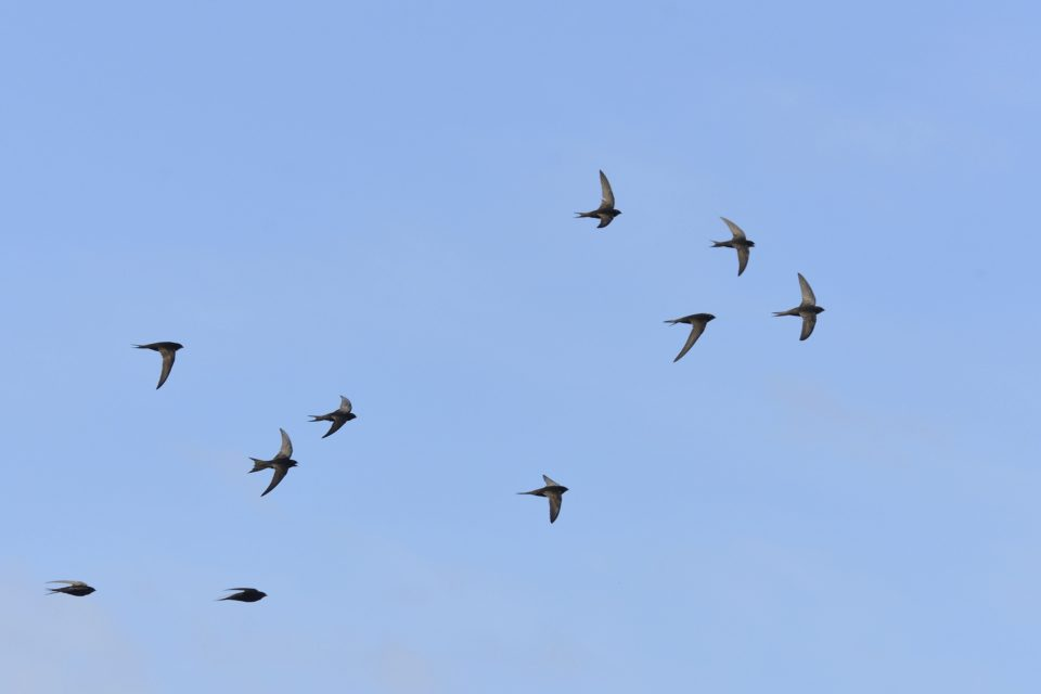 Residents asked to take part in bird survey