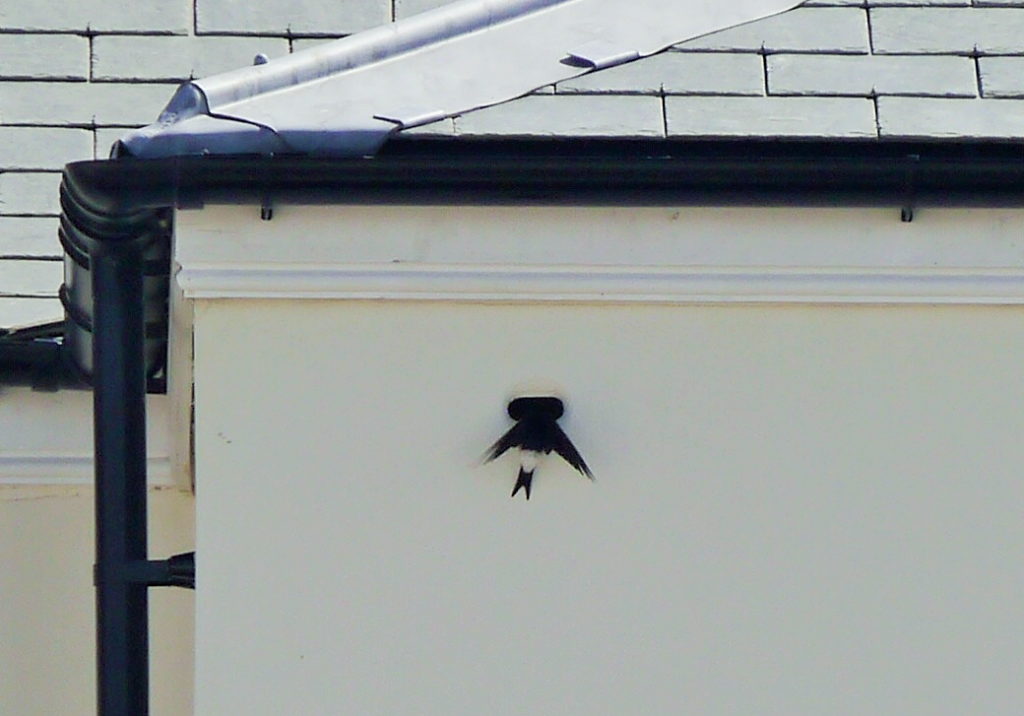 House martins have taken up residence in bird boxes at a number of Duchy of Cornwall developments.