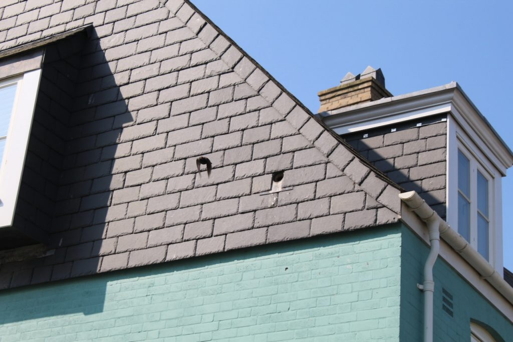 A starling leaves a bird box in Nansledan, the Duchy of Cornwall's development of new homes and businesses in Newquay.