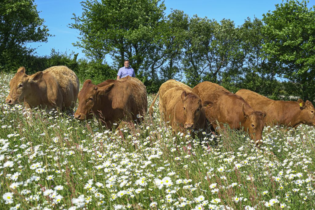 Farmer Adrian Rundle and some of his family's South Devon cattle.