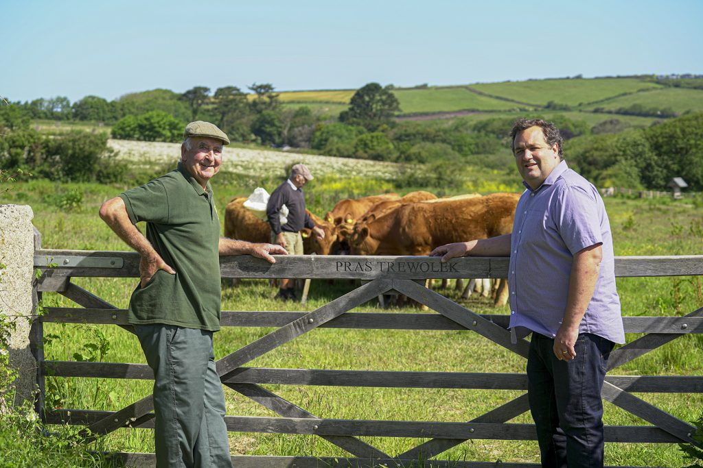 Roger Rundle (left) and son, Adrian, with their South Devon herd at Nansledan.